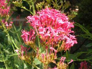 jardineria,mantencion de jardines,paisajista,diseño de jardines, remodelaci