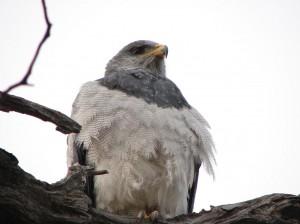 avistamientos de aves la presencia de aves y especies son parte de la